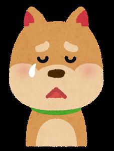 dog3_cry
