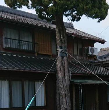永坂邸の木